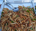 Bamboo worms on plate.png