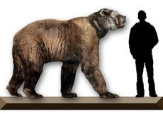 Short-faced bear.jpg