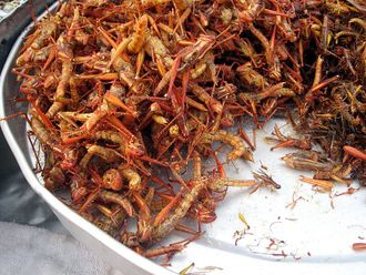 Fried grasshoppers in Bangkok.jpg