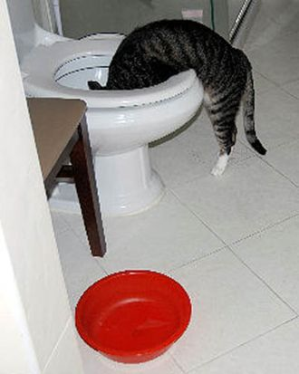 Myllissa-Oscar the tabby cat in thirst seeking water-01.jpg