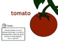 Eo tomato.png