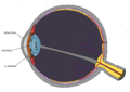 Schematic diagram of the human eye.png